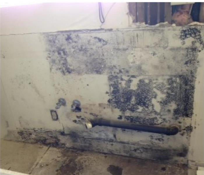 Central Phoenix Mold Damage in a Kitchen Before