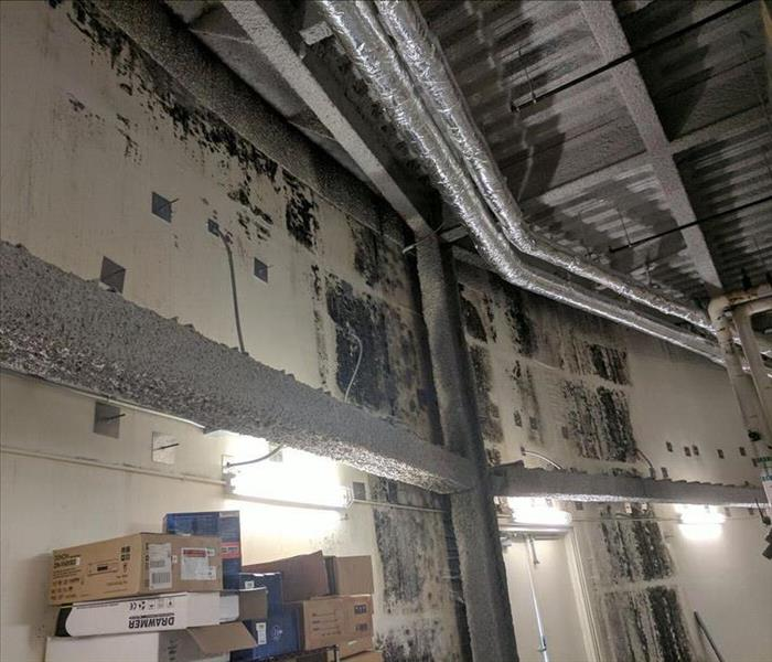 Uptown Phoenix Commercial Mold Problem
