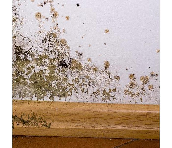 Mold Remediation What You Can Do When You Find Mold Damage in Your Phoenix Home